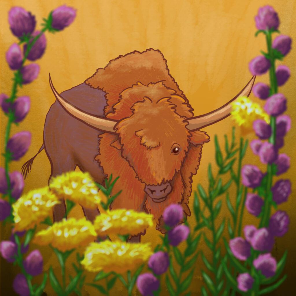 Bison latifrons illustration